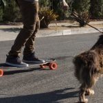 Best Longboard For Dog Pulling: 4 Compelling Options